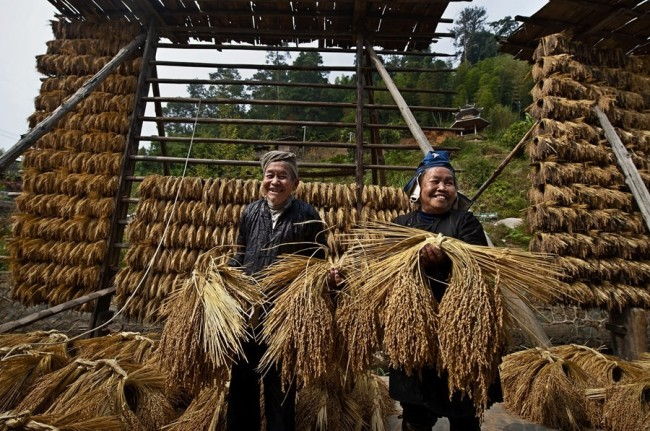 Learn Chinese | Villagers dry ears of rice in China's Guizhou